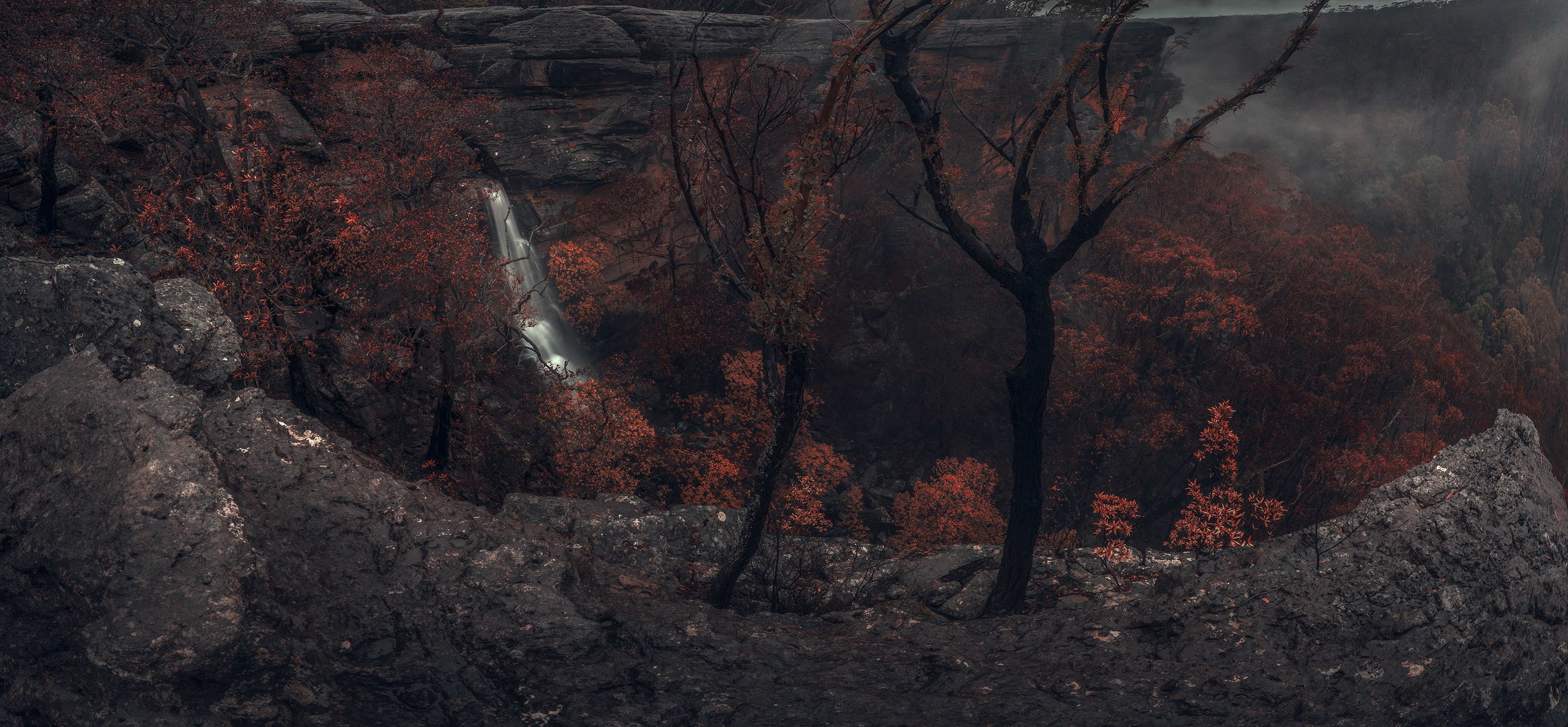 black_forest_black_hills